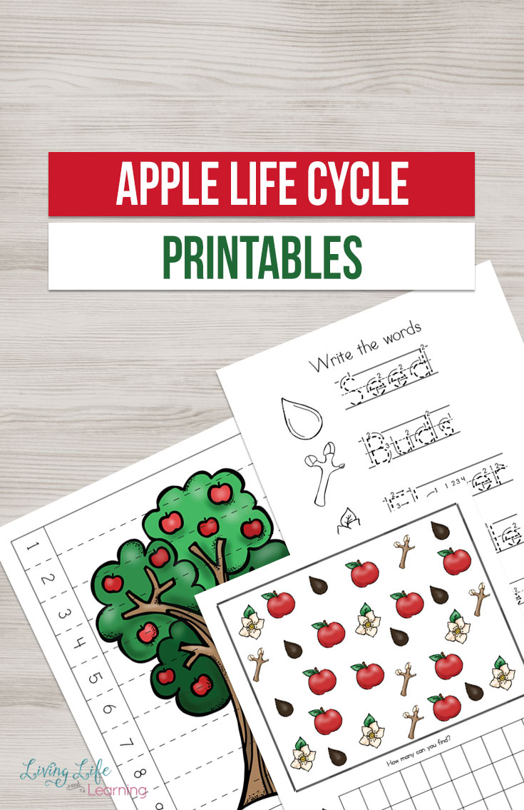 If you are planning on doing an apple unit then you are going to want this printable pack! Inside your children will learn about the apple tree lifecycle through various activities.