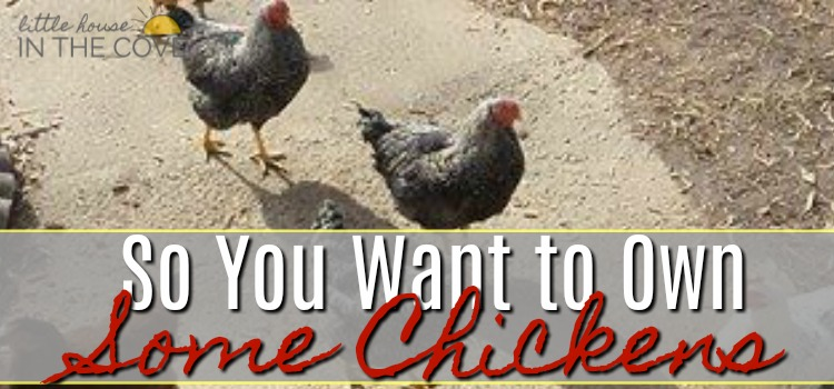 So You want to own some chickens2